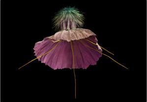 Rob Kesseler Seeds http://papadakis.net/books/seeds-time-capsules-of-life/