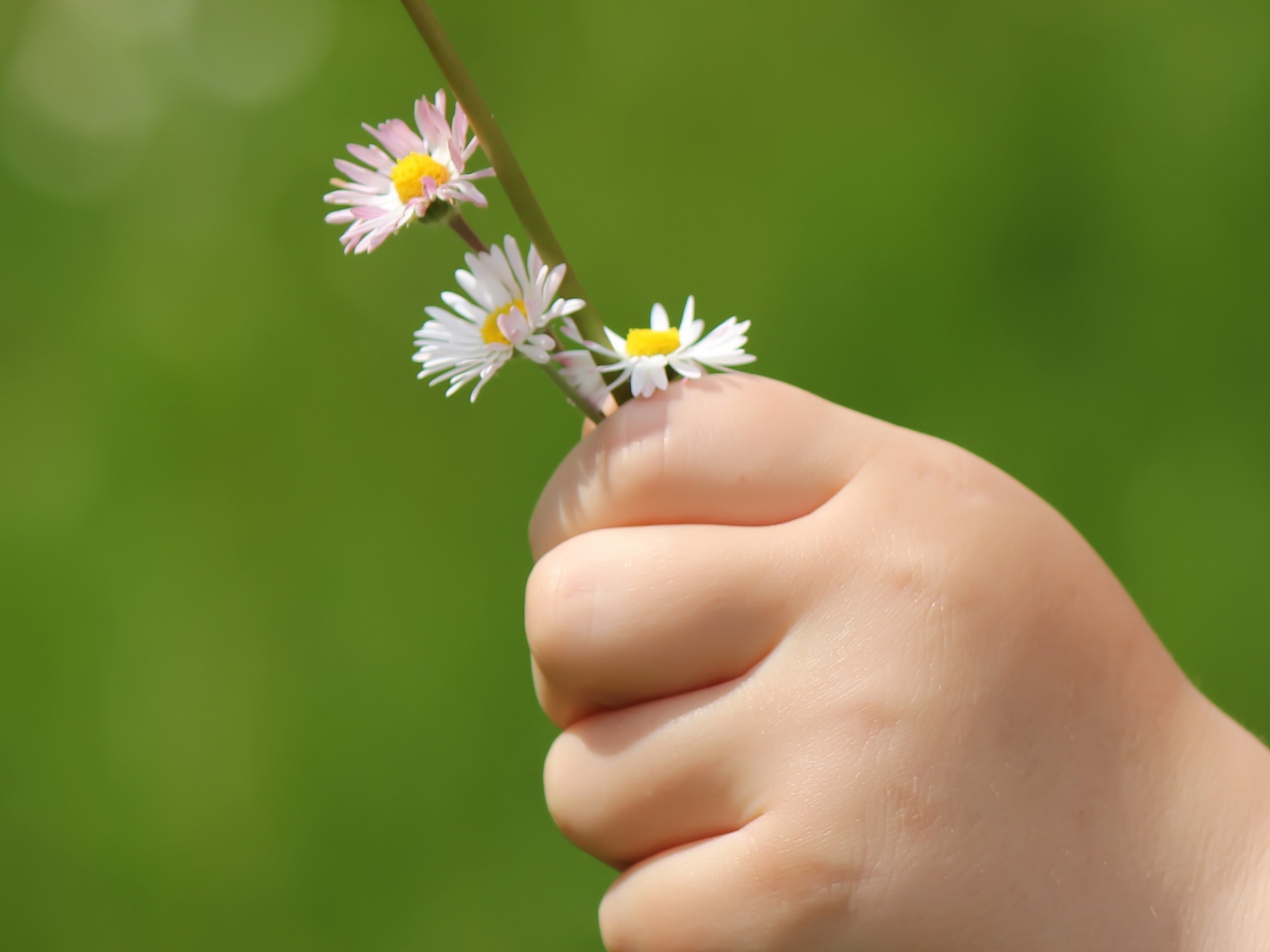 Child hand holding spring flowers